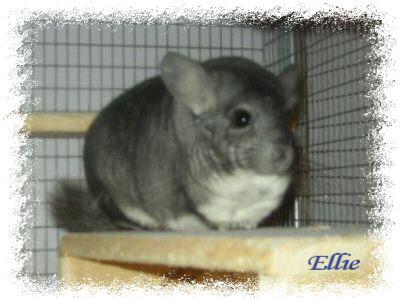 ellie1-3-04-edited.jpg